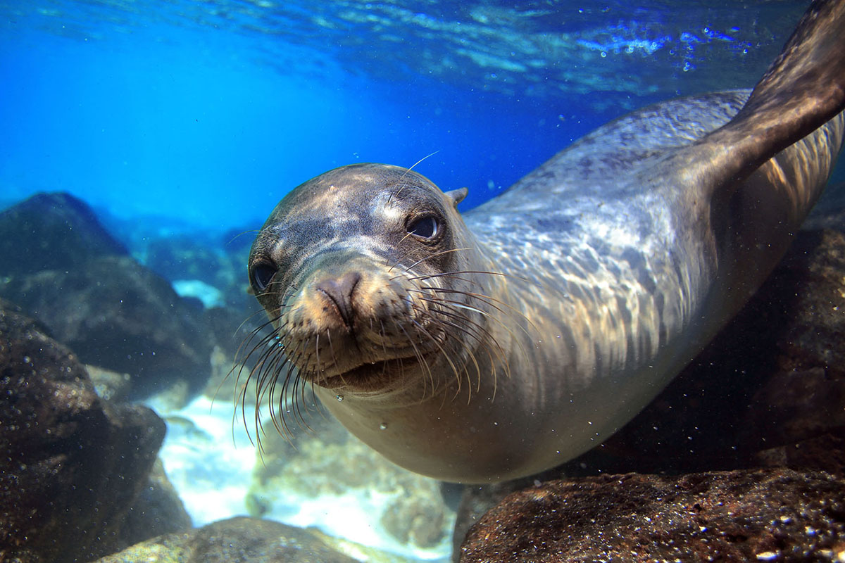 the-mediterranean-seal-in-alonnisos